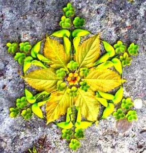 mandala Equinoxe printemps
